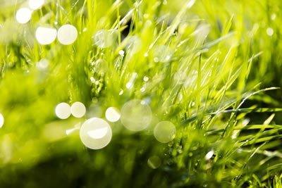 Biomass Energy – Biomass as a Renewable Energy Source
