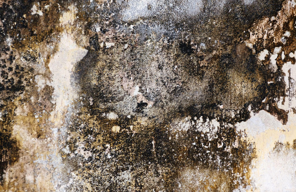 How does mould affect health?