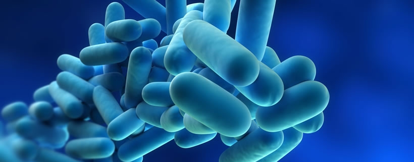 What does Legionella bacteria look like?